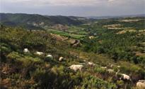 Val d'Allier Vieille-Brioude / Langeac